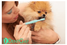 dog teeth cleaning products