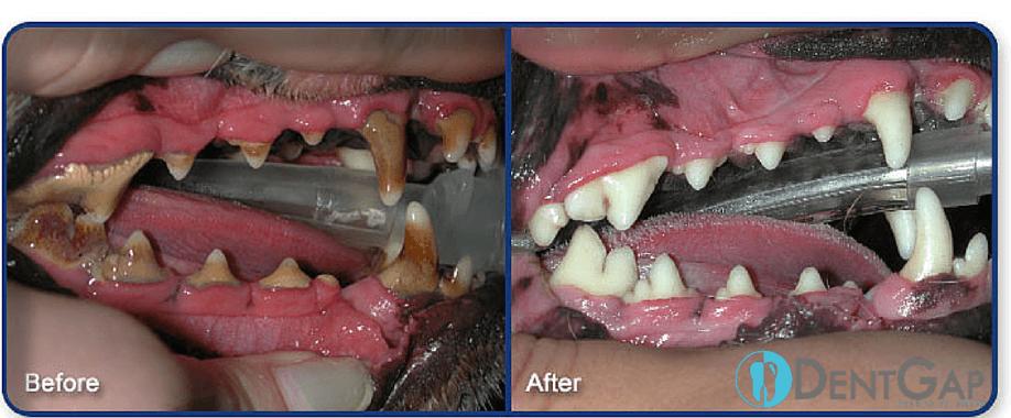 dog teeth cleaning treats