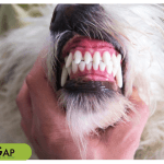 Dog teeth cleaning