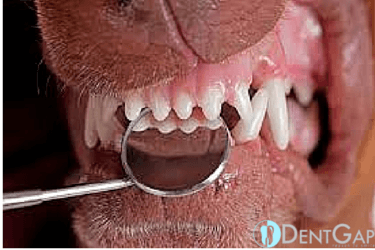 dog teeth cleaning without anesthesia
